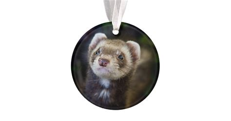 ferret ornament zazzle