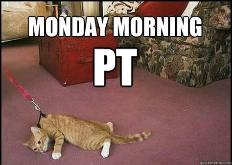 monday morning pt cats are not dogs quickmeme