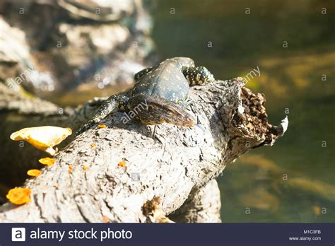 Madu F B madu ganga river stock photos madu ganga river stock images alamy