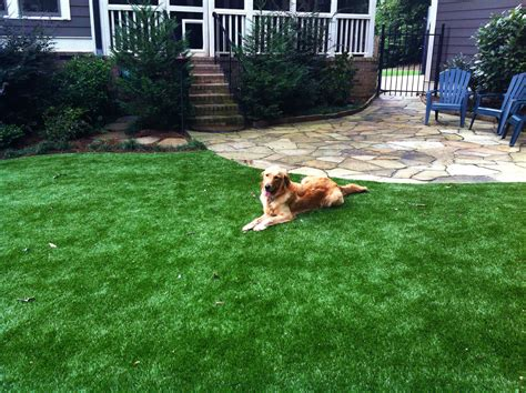 turf dogs softlawn 174 pet turf grass for dogs synthetic turf international