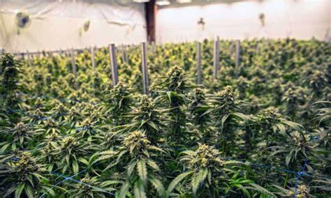 marijuana grow op  offering  full facility