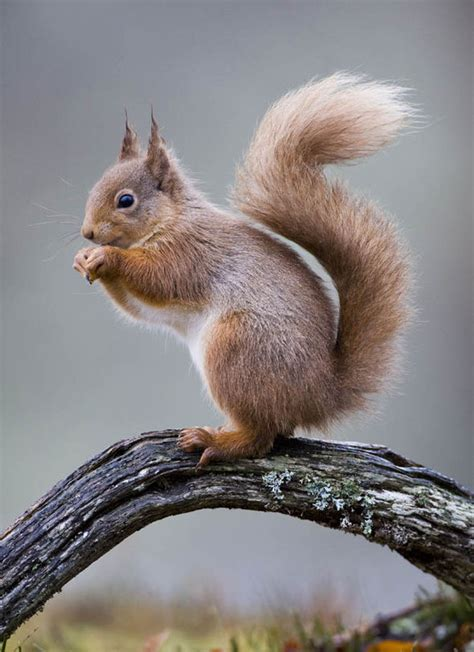 squirrel images save the squirrels volunteers needed to monitor