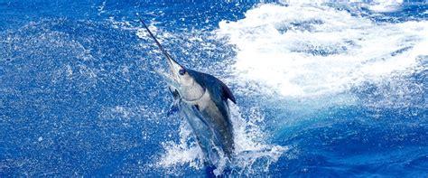 fishing charter boat hawaii big island sport fishing charters kona sport fishing boats