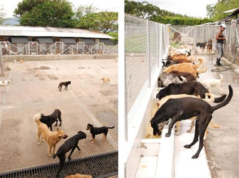 www perro coje a mujer un perro se coje a una mujer newhairstylesformen2014 com