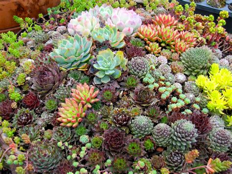 garden the amazing world of succulents