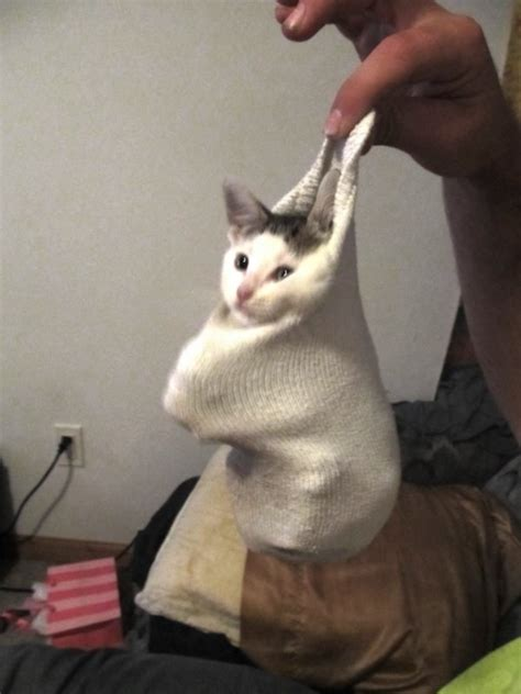 11 deeply confused cats in socks