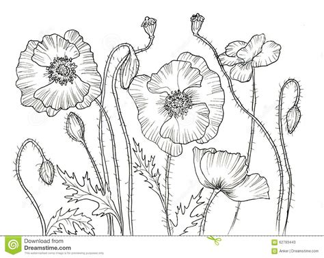 Line Ink Drawing Of Flower Stock Illustration