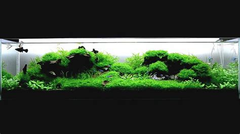 aquascape youtube aquascape quot wood and moss quot youtube