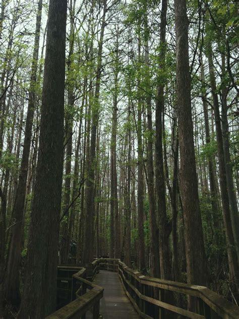 Highland Hammock Cground highlands hammock state park cing