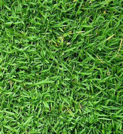 Mesin Potong Rumput Yang Bagus the journey begins tanam rumput karpet jepun laman tepi rumah