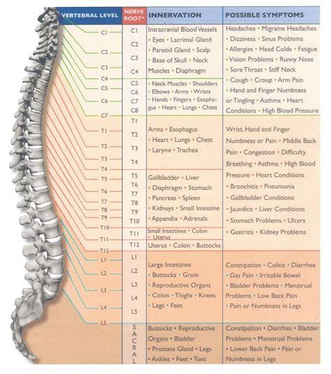 diagram of cervical spine diagram of spine and neck anatomy organ