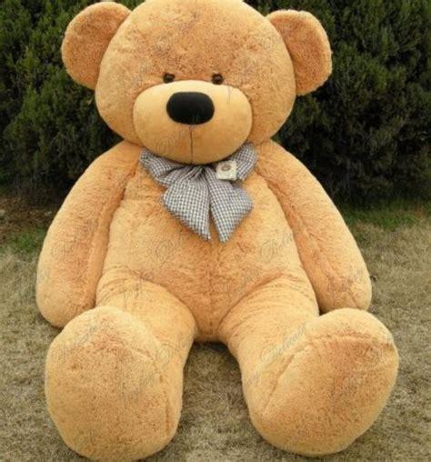 Sample Resume Objectives For Athletic Director by Big Teddy Bears 28 Images Teddy Bears Big Teddy Bears