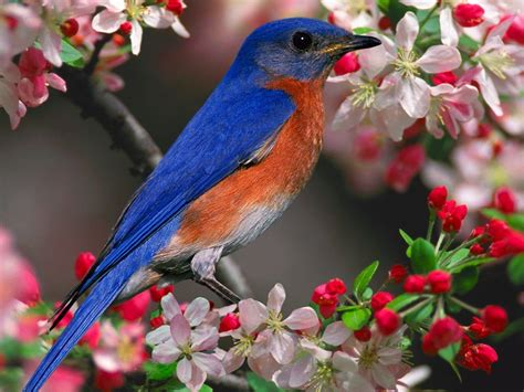 wallpaper blue birdcage blue bird wallpapers wallpaper cave