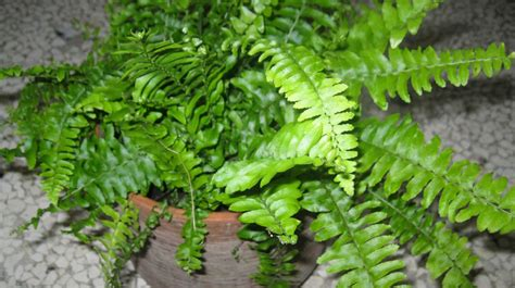 10 best and suitable plants for vertical garden the self