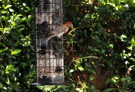 bird feeder types and common features at the home depot