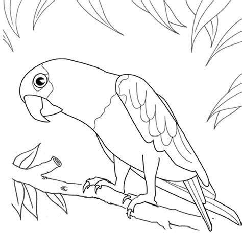 printable bird coloring page parrot animal coloring