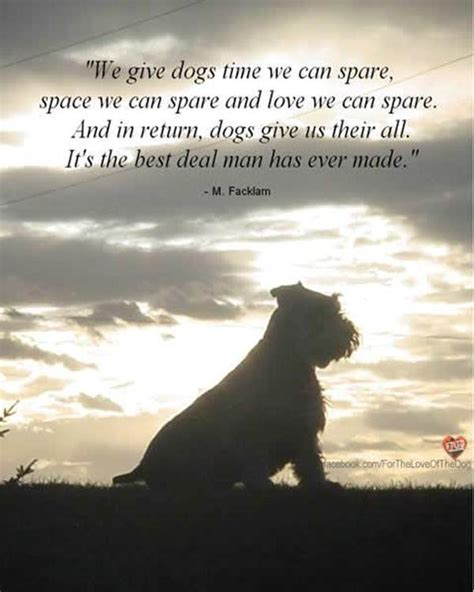 quotes about dogs dying quotes about pets dying quotesgram
