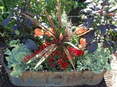 fall garden plants colorful plants in fall gardens chester county and