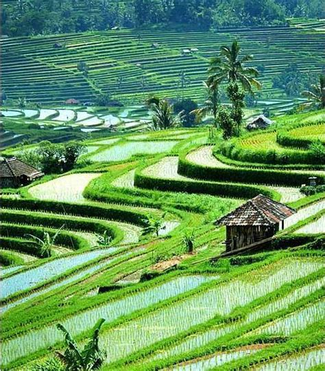 wallpaper pemandangan alam bergerak jakarta images bali indonesia wallpaper and background