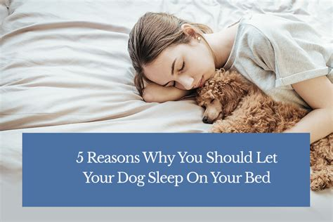 why does my dog sleep under my bed should i let my sleep in my bed 5 reasons why you should