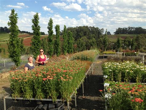 Flemings Gardens by A Sneak Peak Of Our Plants From Flemings Nursery For Mifgs