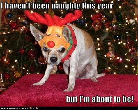Christmas Dog Meme - funny christmas dog memes images sportleash
