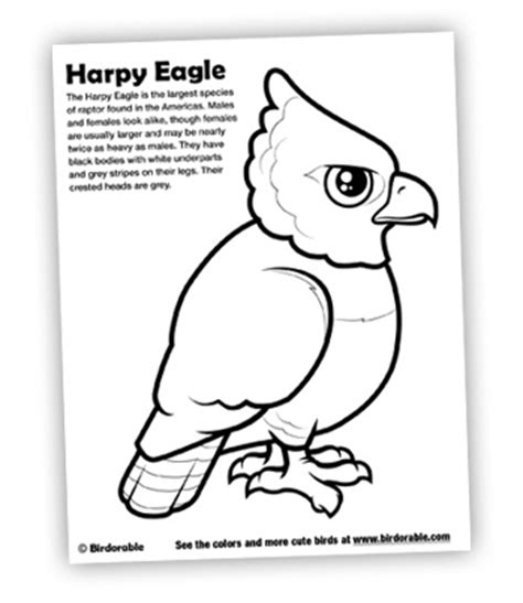 coloring page harpy eagle free downloads page 2