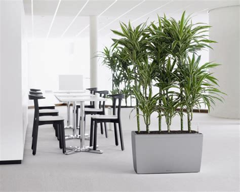 Office Planter by We Are Committed To Delivering Beautiful Plant Solutions
