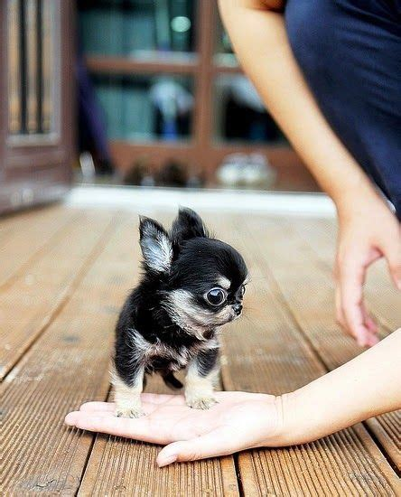 most adorable puppies 17 best images about looking forward to summer on pergolas willpower and