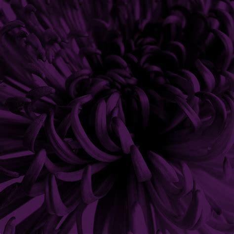 dark purple colors dark colors latest interior design home color scheme sherwin williams sw repose gray sherwin