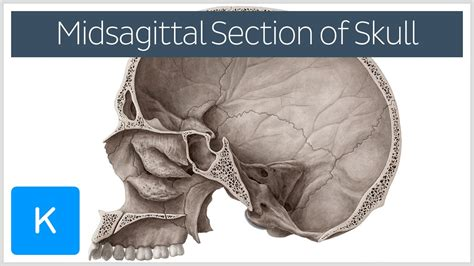 midsagittal section video midsagittal skull kenhub