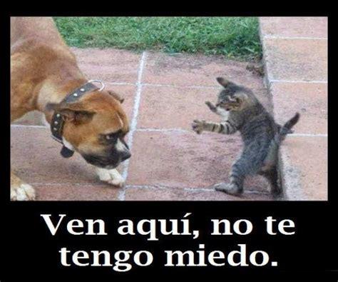 fotos graciosas de borrachos para facebook im 225 genes de perros y gatos graciosas para el whatsapp