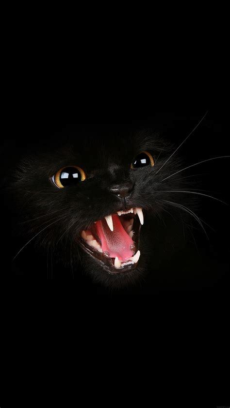 black cat wallpaper iphone for iphone x iphonexpapers