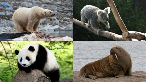 animal pictures animals for planet earth animal sounds android