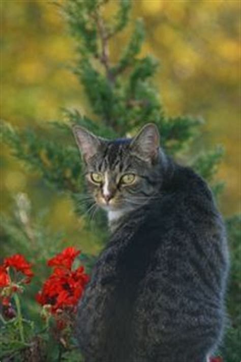 how to make a cat repellent home remedies for
