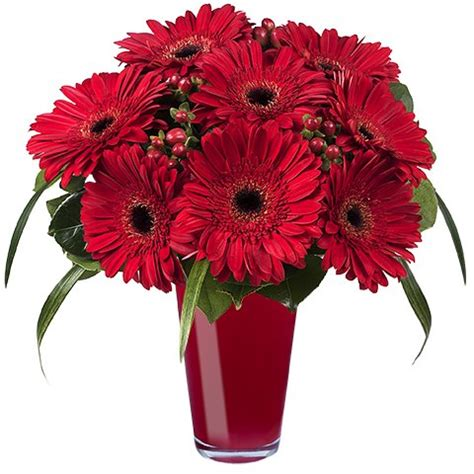 fiori gerbere fiori portafortuna bouquet di gerbere rosse a domicilio