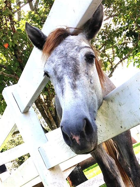 adoption south florida 961 best home wanters images on 1 american quarter horses and