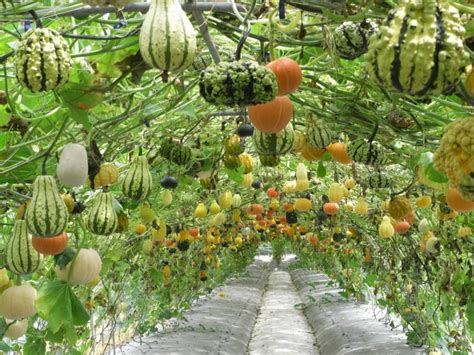 Garden Of Food Hanging Garden Of Food Rebrn