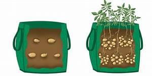 картофель под соломой и в соломе фото