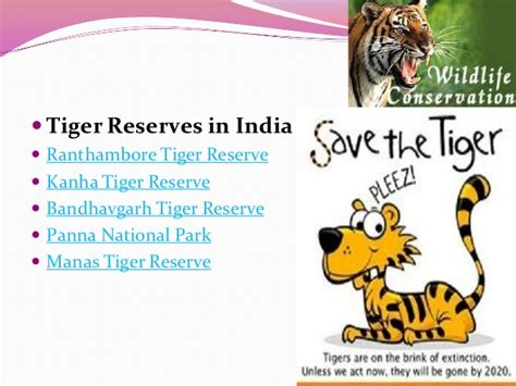 Essay On Tigers In India by Essay On Save Tiger Project