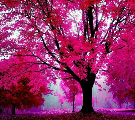 wallpaper pink leaves pink tree goodness i love god for this i wish i had