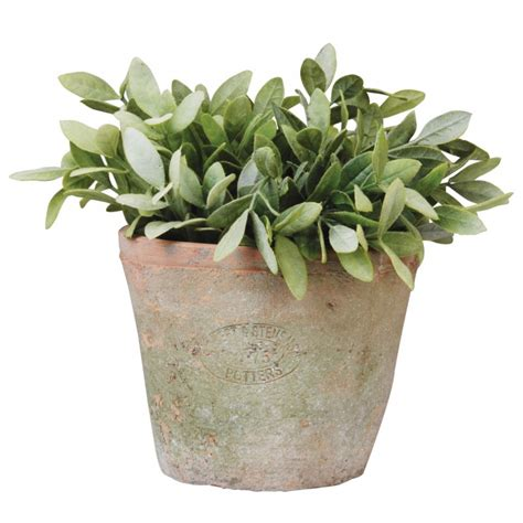 plant potters terracotta plant pot