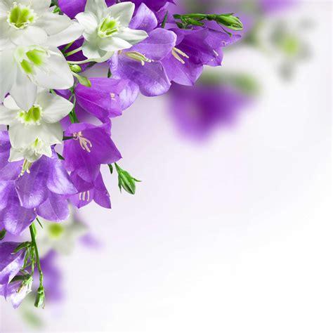 Purple Flowers Background Ideas Also Flower Backgrounds Purple Flower Backgrounds Graphicpanic