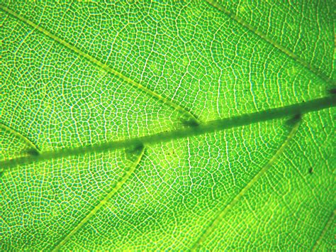 mosaic pattern leaves patterns in the climate change mosaic ecotone news and