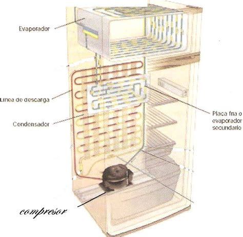 preguntas basicas de refrigeracion separar frigorifico de congelador yoreparo