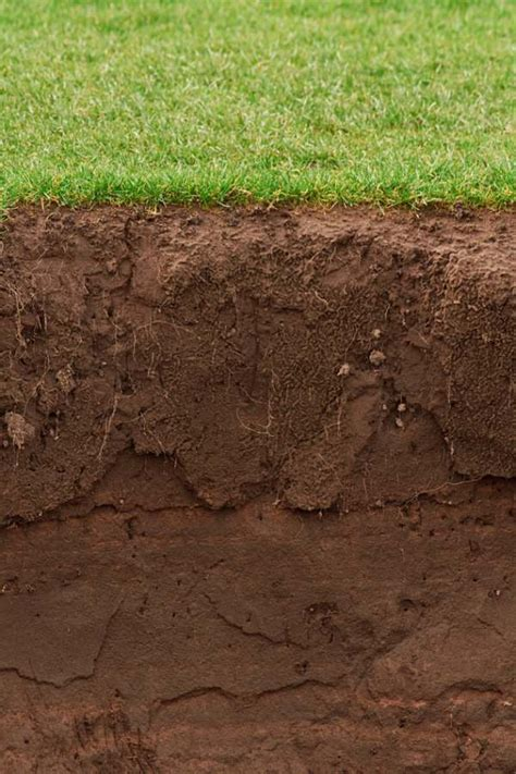 soil texture digging deeper into the soil in your garden