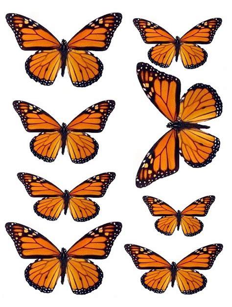 martha stewart butterfly template new martha stewart butterfly template free template design