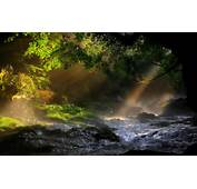 Landscapes Nature Forest Sunlight 1920x1200 Wallpaper Forests