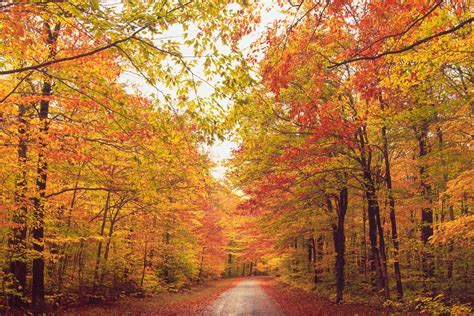 new fall colors new fall foliage best areas to the leaves