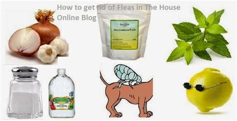 101 diy home remedies to get rid of fleas naturally
